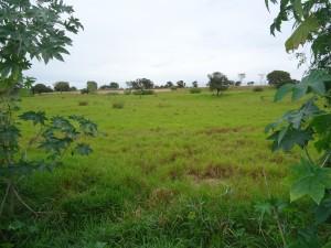 terreno Coxim